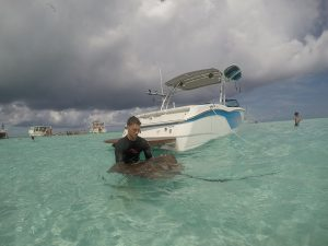 Stingray city SWS Cayman